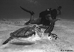 This image of a turtle was taken in Cozumel 2006, in the ... by Steven Anderson 